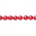 Punane bambus-korall / 5,5mm/40 cm
